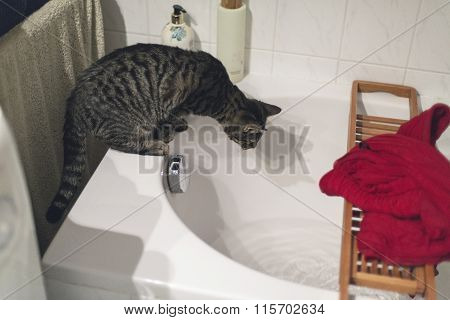 Curious Tabby Cat On Edge Of Bath Watching Flowing Water.