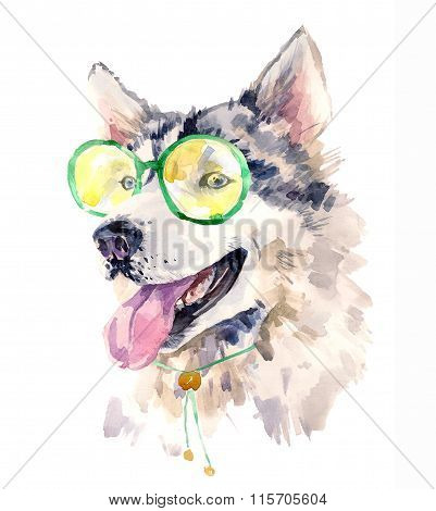 Modern watercolor husky in fashionable glasses and collar.