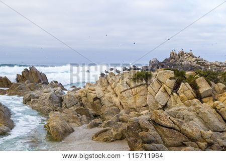 Bird Rock with water birds. seagulls and cormorants birds sitting on the rocks Monterey California
