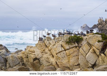 Bird Rock With Water Birds. Seagulls And Cormorants Birds Sitting On The Rocks, Monterey, California