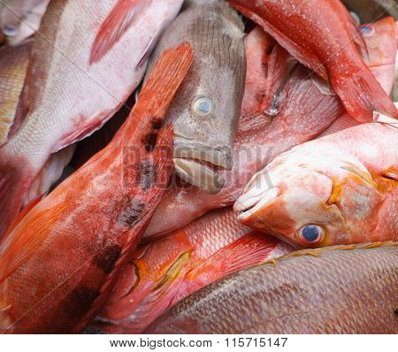 Close up of a variety of fresh seafood on display at fishmarket.