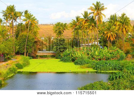 Jungle with coconut palm trees near Saint Paul on Reunion Island. Greeting from tropical paradise.