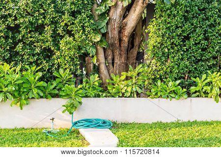 Shady green garden. a tree in garden