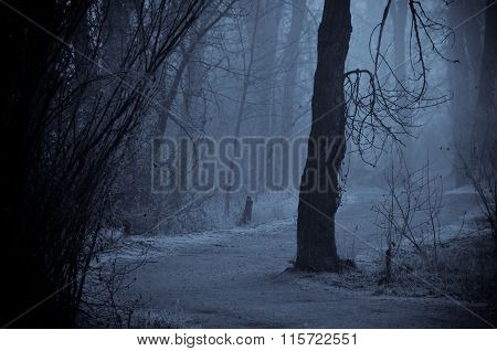 Mood Shadows Along The Path In The Dark Misty Forest