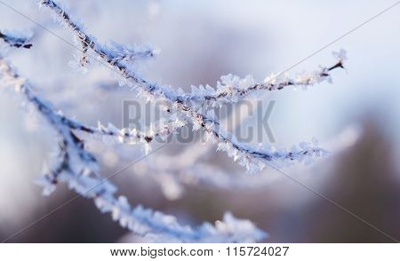 Hoarfrost On Tree Branch In Close Up.
