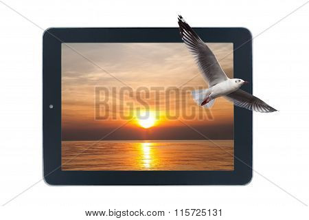 Seagulls Flying Out Of Picture Sunsets In Tablet