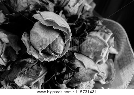 Black And White Style Of Wither Rose As Background