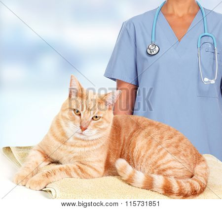 Ginger cat in veterinary clinic.