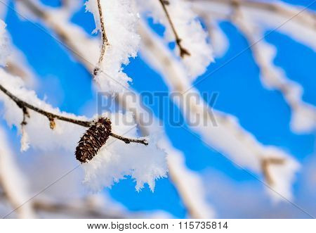 Branches Of A Birch With White Brilliant Snow And Hoarfrost