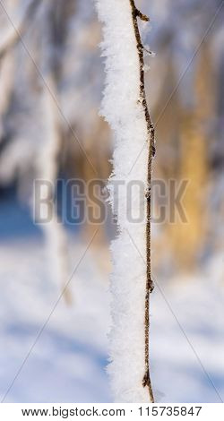 Tree Rod With White Brilliant Snow And Hoarfrost