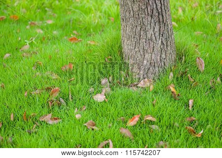 Trunk Of The Tree On The Grass Field