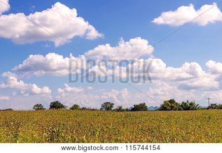 Corn Field In Agricultural Rural Landscape