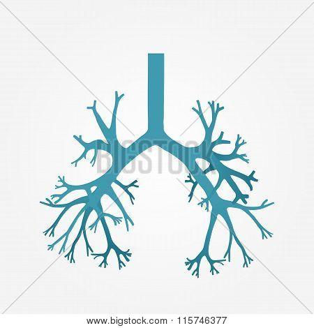 Human Bronchus In Vector