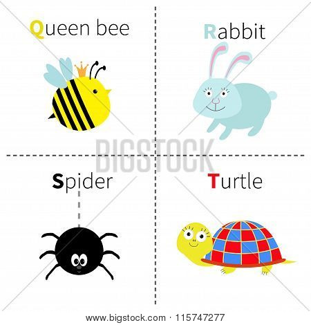 Letter Q R S T Queen Bee Rabbit Spider Turtle Zoo Alphabet. English Abc With Animals Education Cards