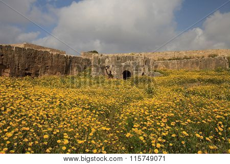 Flower Field In The Ancient Tombs Of The Kings In Paphos, Cyprus