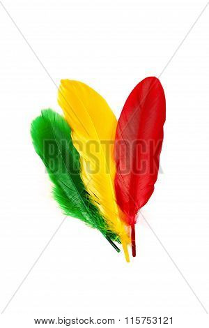 Colorful Feathers On White Background.