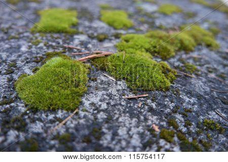 Fixedregular Interlocking Tiles With Moss