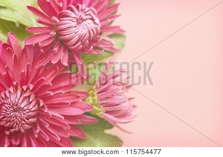 Pink Aster Flowers On Pink Background