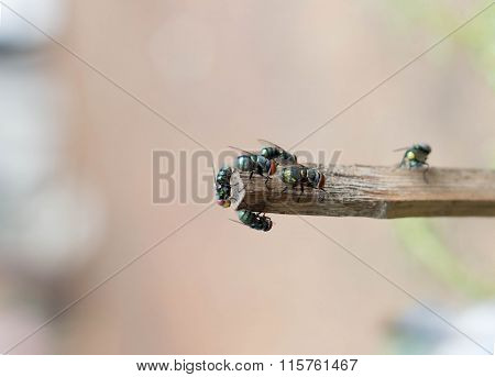 Fly Group On Wood