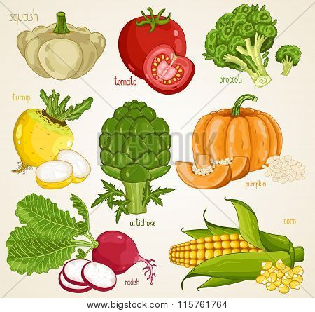 Vegetables isolated vector. Organic product, farm food. Vegetable mix, tomato, pumpkin, turnip, artichoke, squash, radish, broccoli.