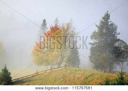 Landscape With Trees And Fog