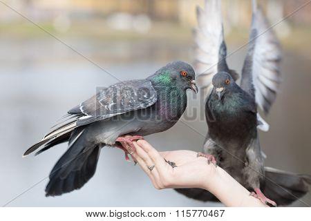 Portrait Of Two Doves