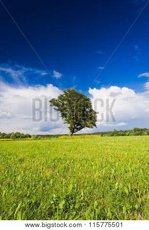 Field Landscape Scenic View