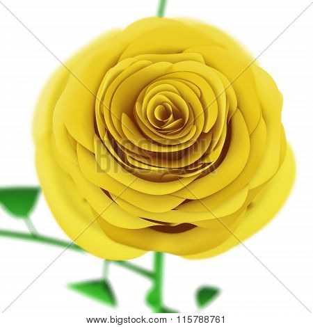 Yellow rose close up isolated on white background.