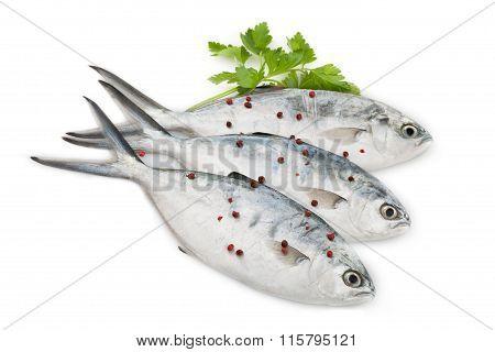 Raw Trevally Fish On White