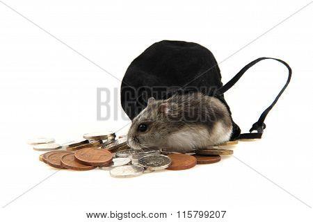 Dzungarian Hamster And Czech Coins