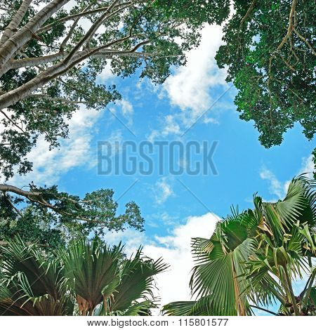 Background of branches of trees and sky