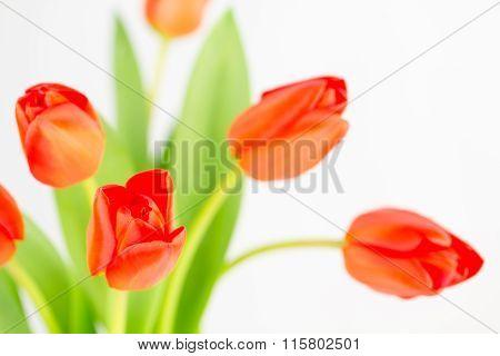 Orange Tulip Cluster