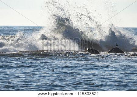Wave Smashes Against Rocks