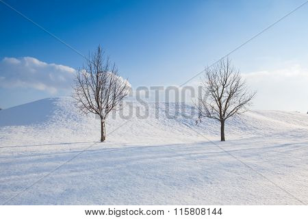 Two Lonely Trees In A Winter Landscape