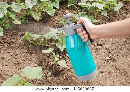 Male Hand Holding Spray Bottle