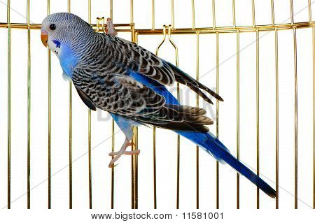 Parakeet On A Lattice Cage