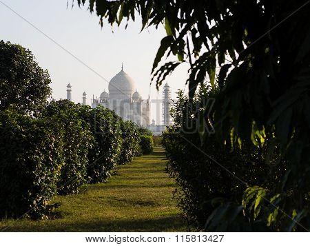 View From Mehtab Bagh To Taj Mahal