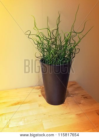 Curly Green Plant Decorating A Wooden Table