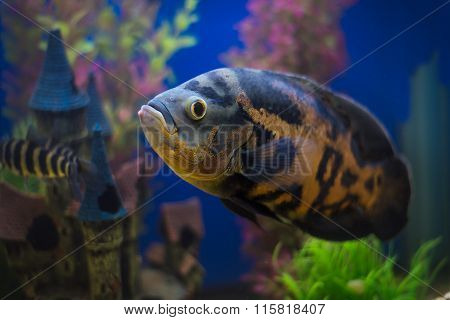 Exotic Tropical Coral Fish Environment Of The Aquarium