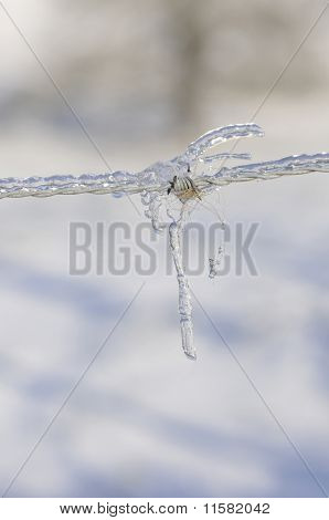 Barbed wire very iced with a little piece of fur