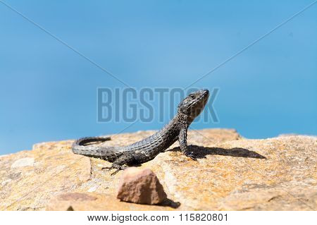 Reptile On The Rocks
