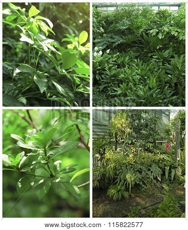 Collage with tropical plants in greenhouse