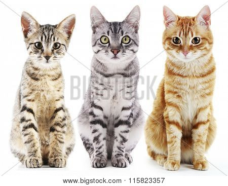 Three cute cats, isolated on white