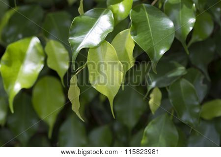 Closeup Of Green Leaves