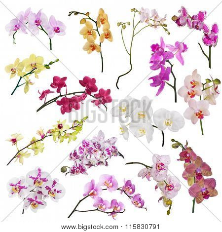set of different orchid flowers branches isolated on white background