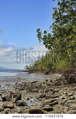 Port Douglas Mangroves 8532
