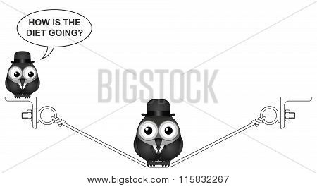 Overweight bird