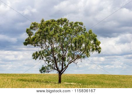 Single large tree on a field with copy space
