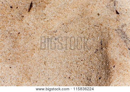 sawdust close up