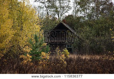 The thrown house among bushes.
